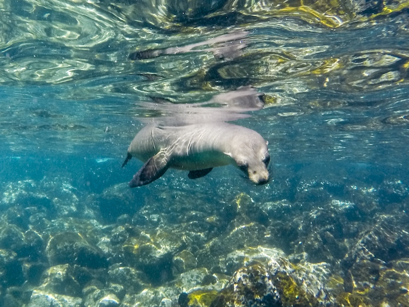 coral galapagos cruise