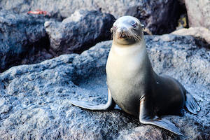 Galapagos Majestic Cruise