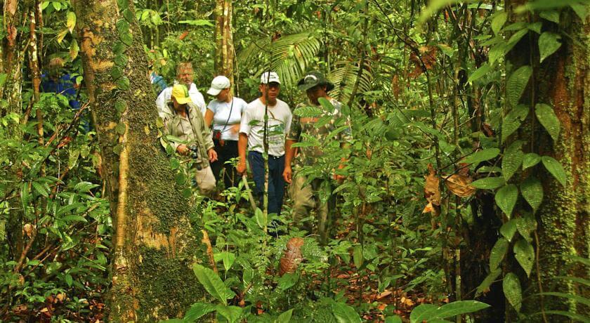 Brazil Amazon Tours Jungle Trek