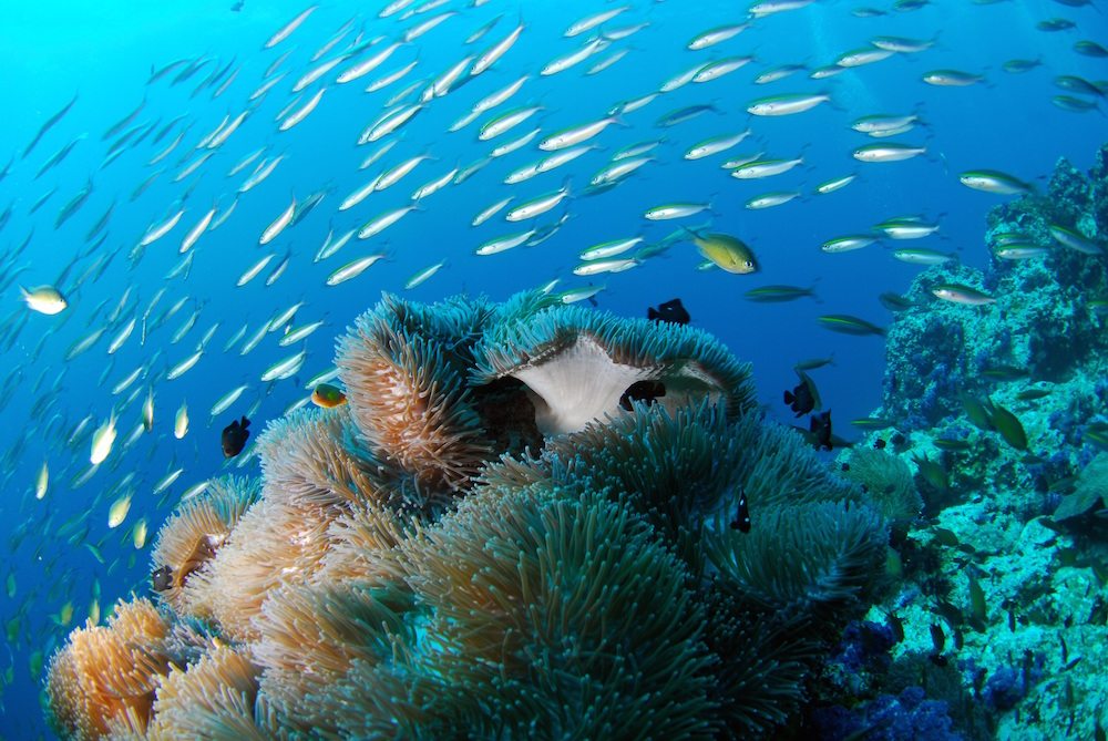scuba diving in the galapagos