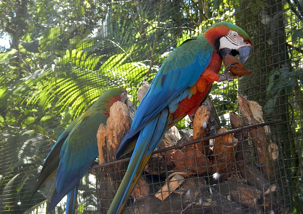 macaw and environment