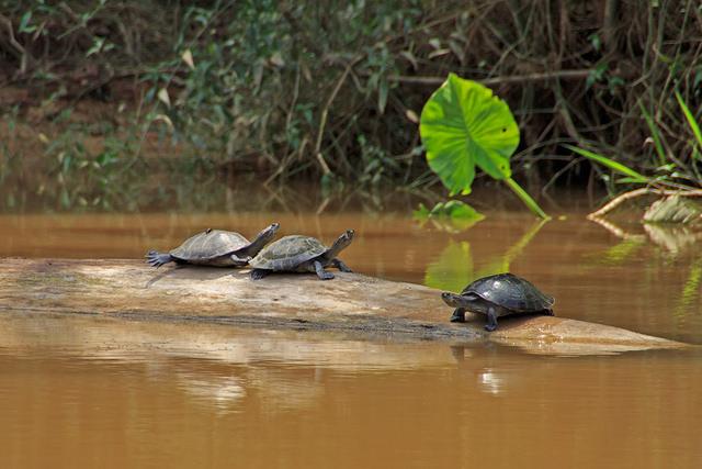 Anakonda Conservation Projects