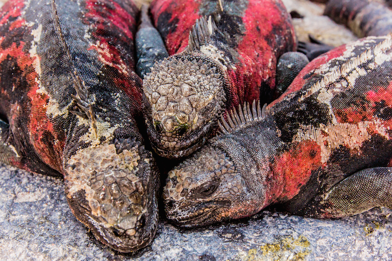 who discovered the galapagos islands