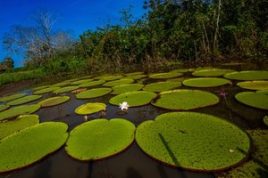 Ecuador Amazon River Cruise    Add Me