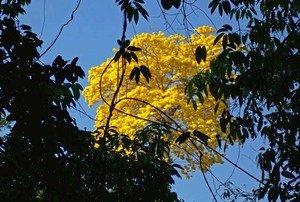Brazil Amazon Tours Flora
