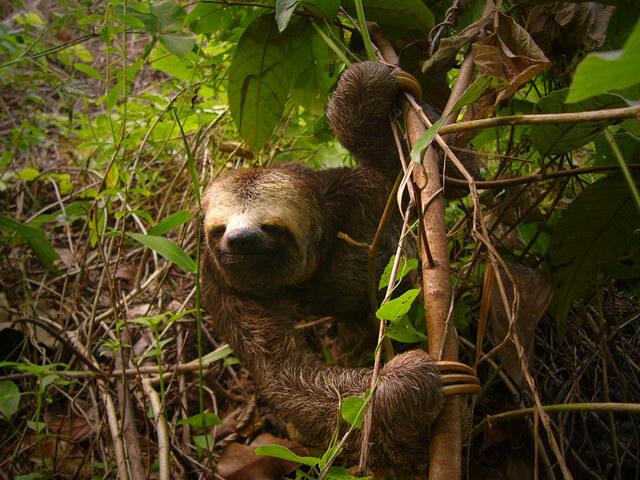 Jacare-Acu wildlife cruise