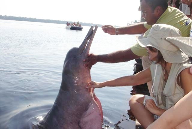 Feeding Pink River Dolphins