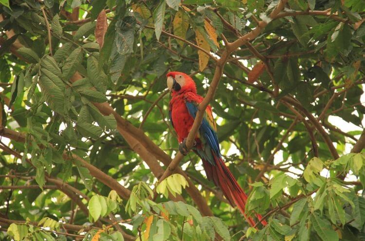 Ecuador Amazon Jungle Tours