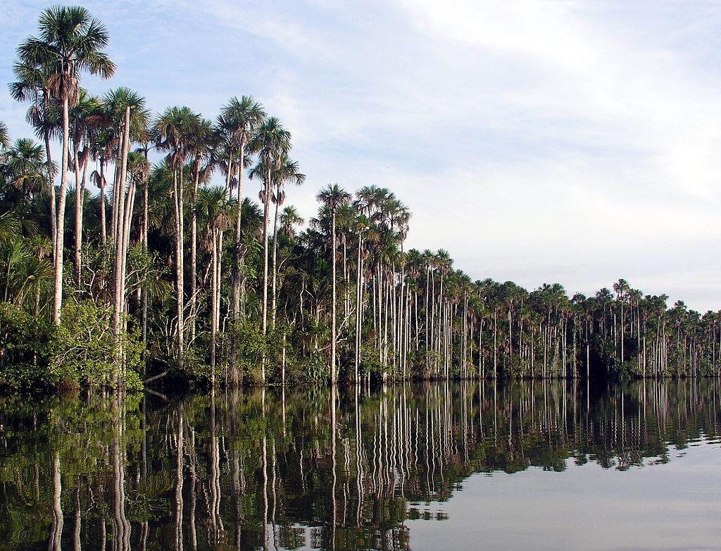 Lago Sandoval Puerto Maldonado