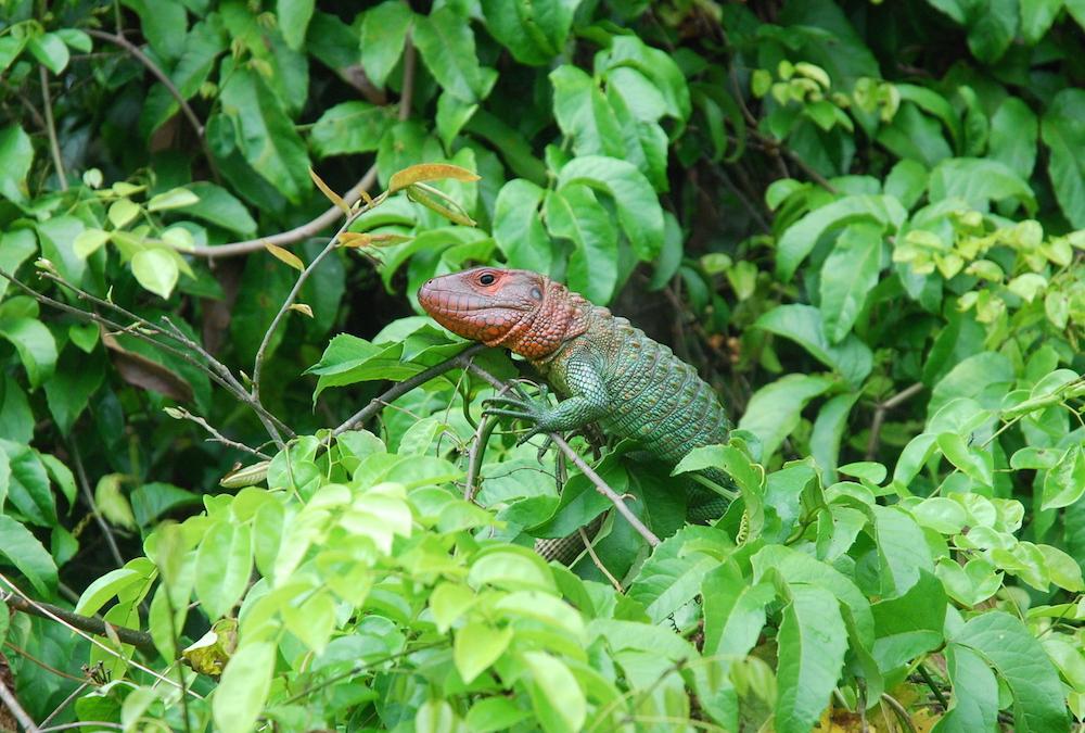 Amazon River Tour