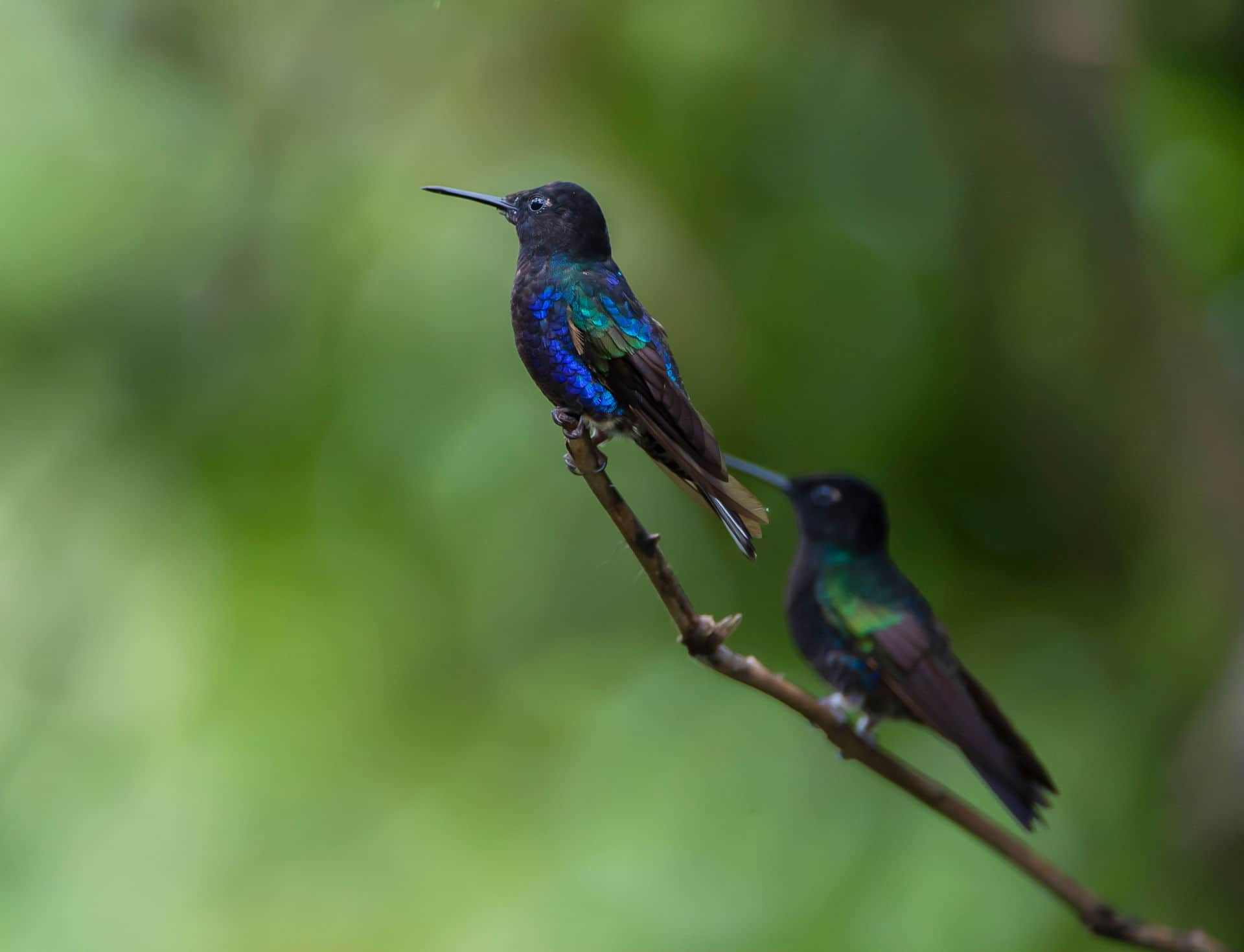 Mashpi Lodge Birdwatching