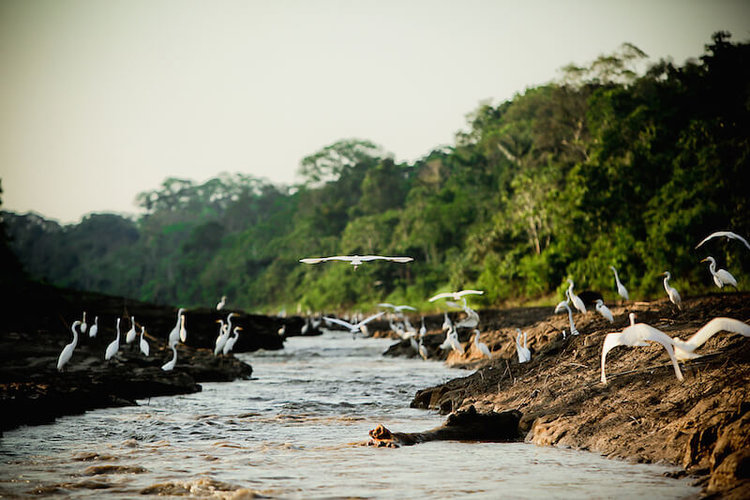 Fly Direct from Cusco to Iquitos