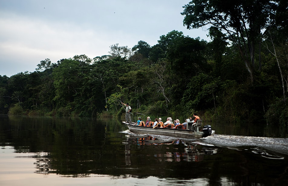 Delfin Amazon