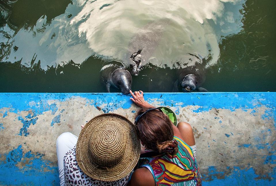 delfin amazon river cruises