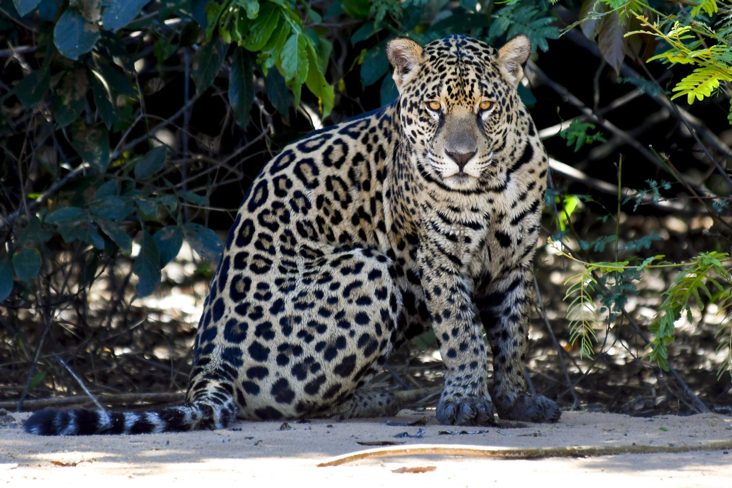 pantanal tour