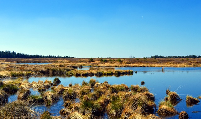 Brazil Pantanal
