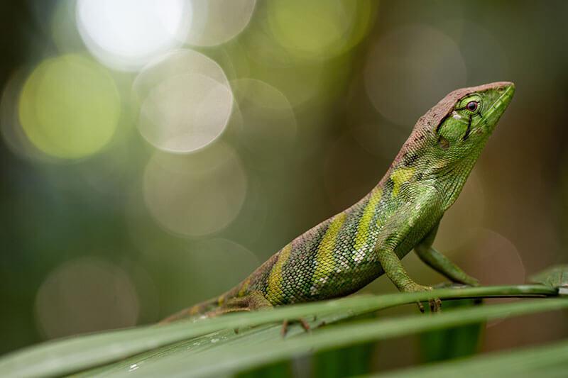 Napo Wildlife Center Ecuador