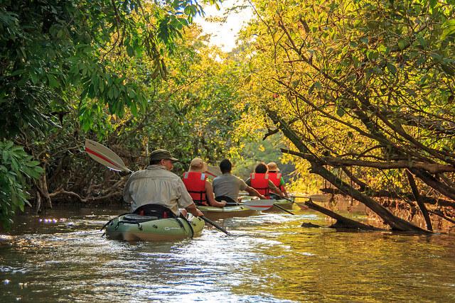 Manatee Amazon Explorer Cruise