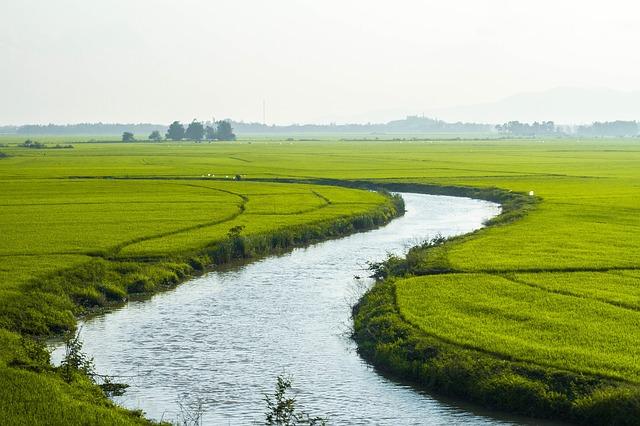 Rice fields Mekong