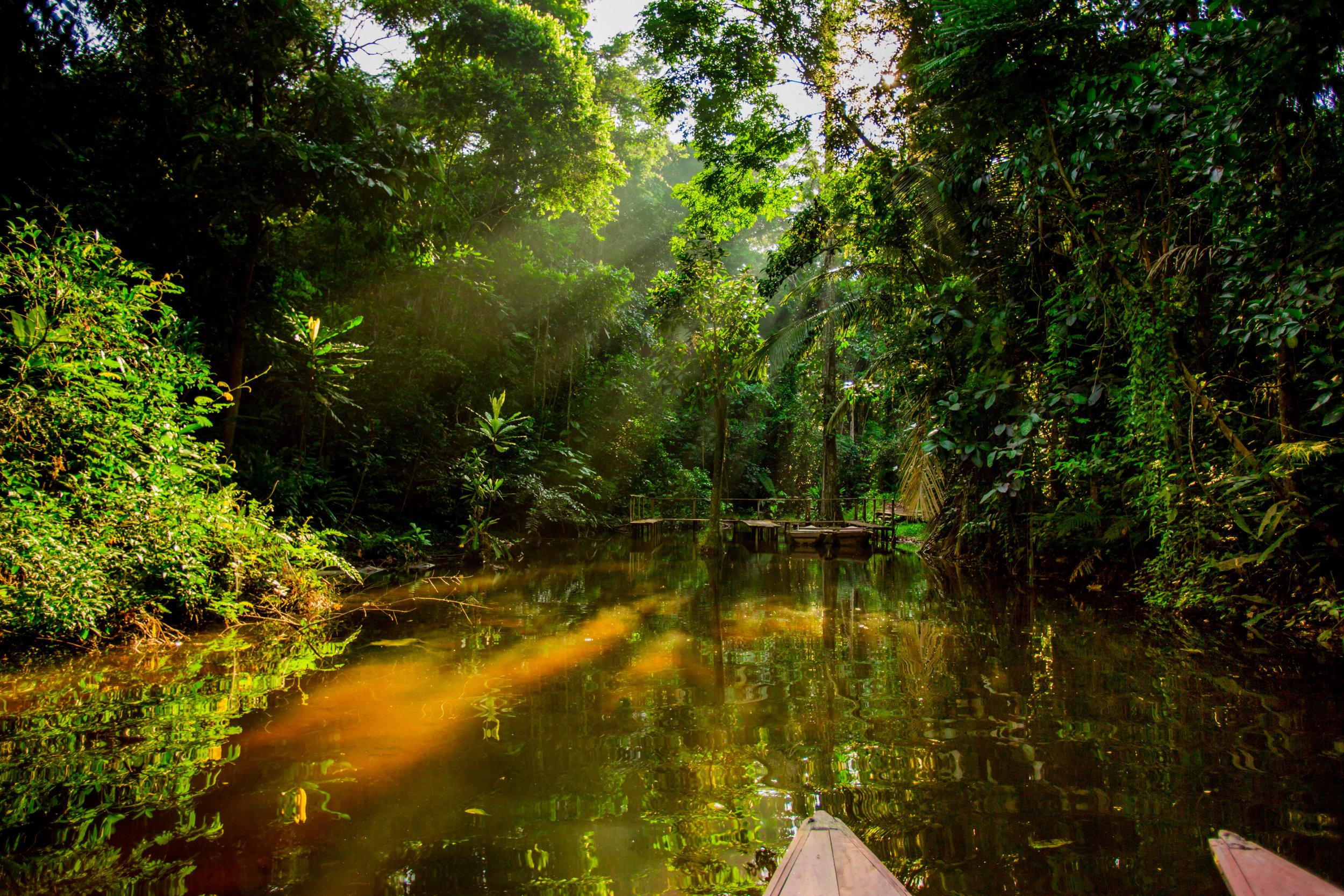 North Peru Amazon Jungle