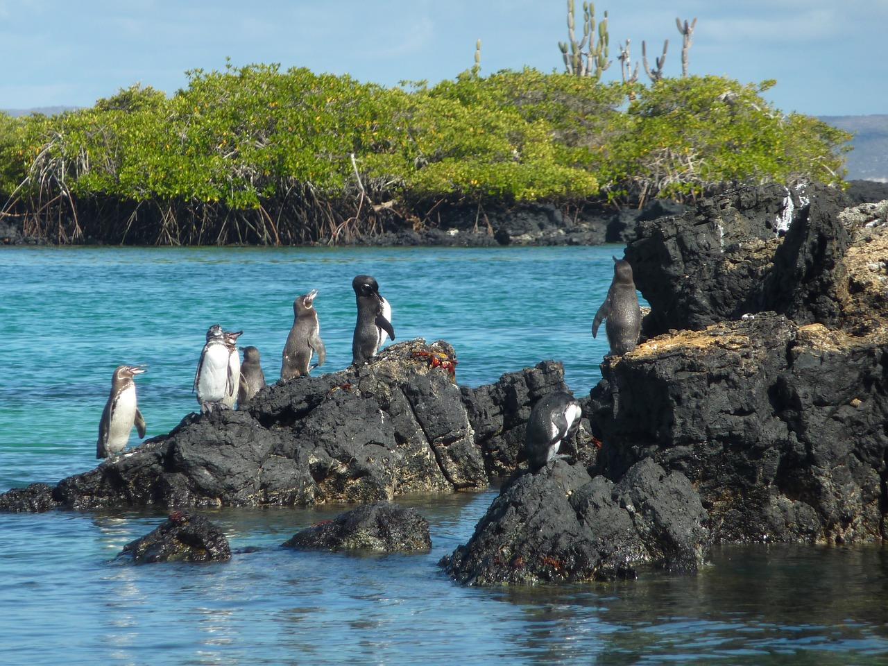 galapagos-penguin-1664625_1280.jpg