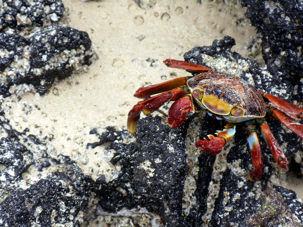 crab-164857_1280.jpg