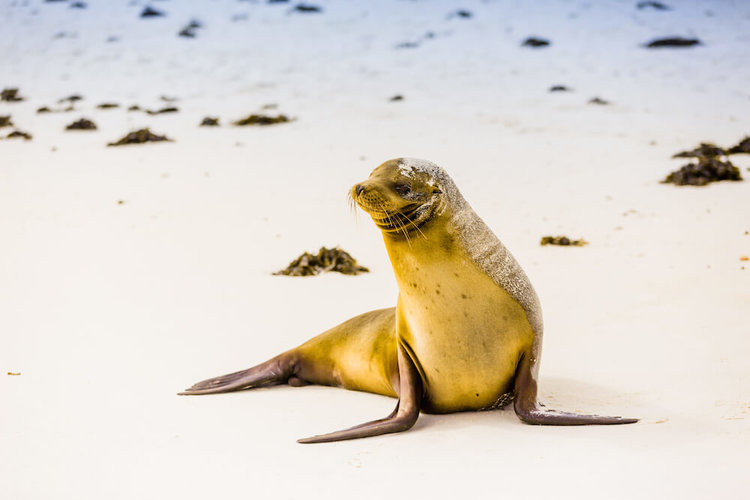 Galapagos Offers 2019 2020