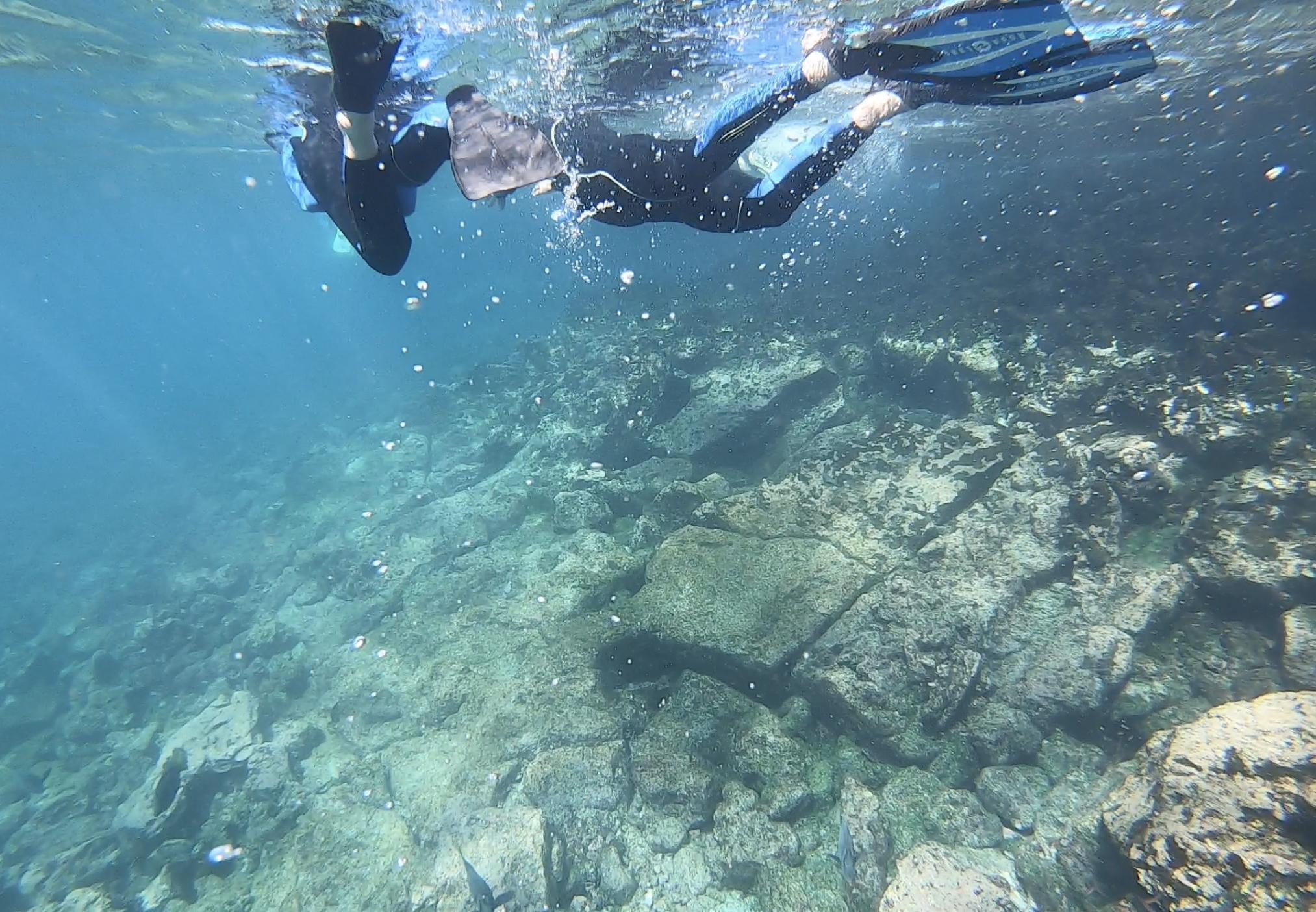 Theory Cruise Snorkelling