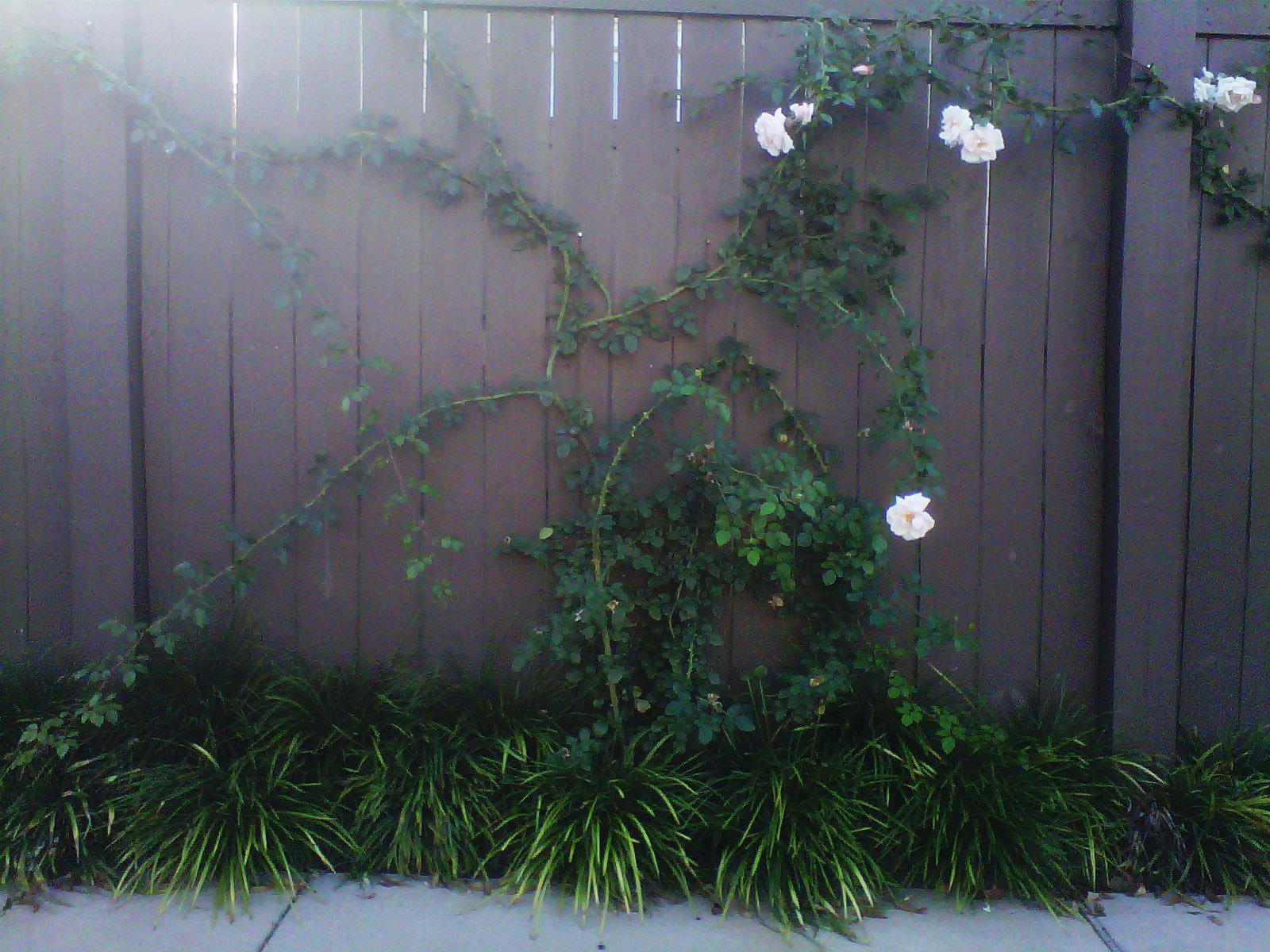 Justin Stelter Landscape Gardening - Modern Suburban Landscaping - 12591732943_44aa50f80a_o.jpg