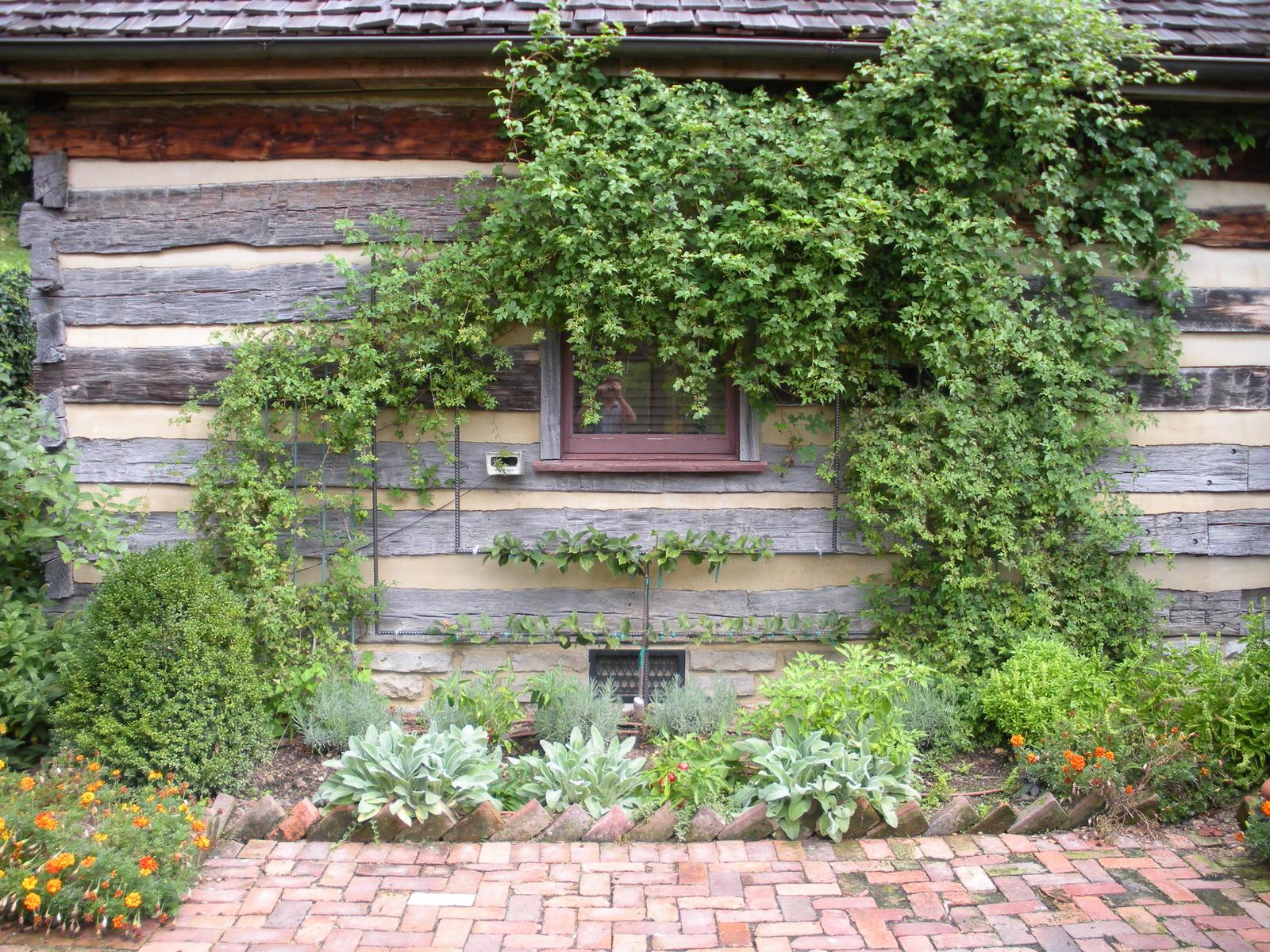 Justin Stelter Landscape Gardening - Espalier Installations - 2886257301_08d85e3a66_o.jpg