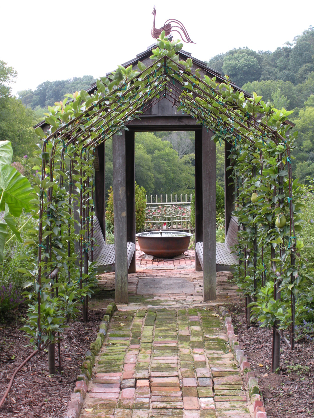 Justin Stelter Landscape Gardening - Espalier Installations - 2887086796_629e410b63_o.jpg