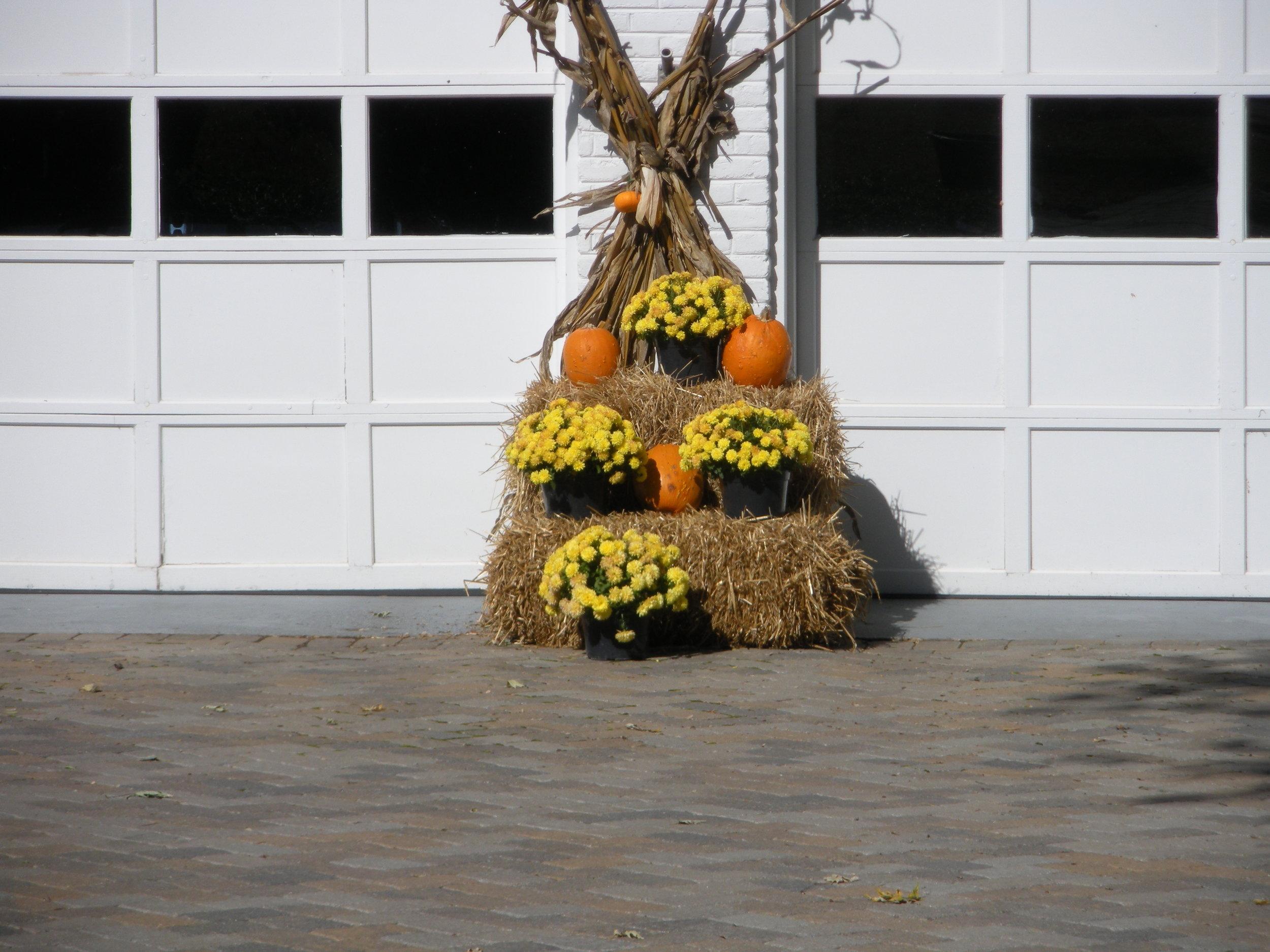 Seasonal Fall Display with Pumpkins and Chrysanthemums