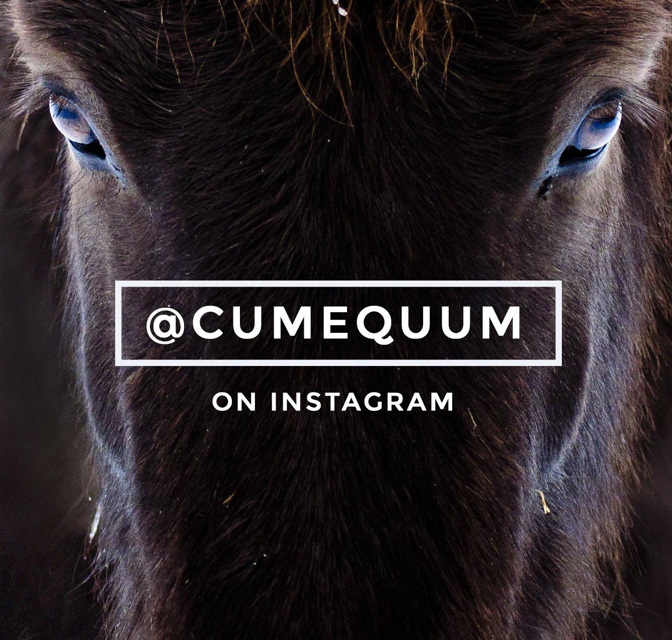 cumequum-myra-wippler-instagram.jpg
