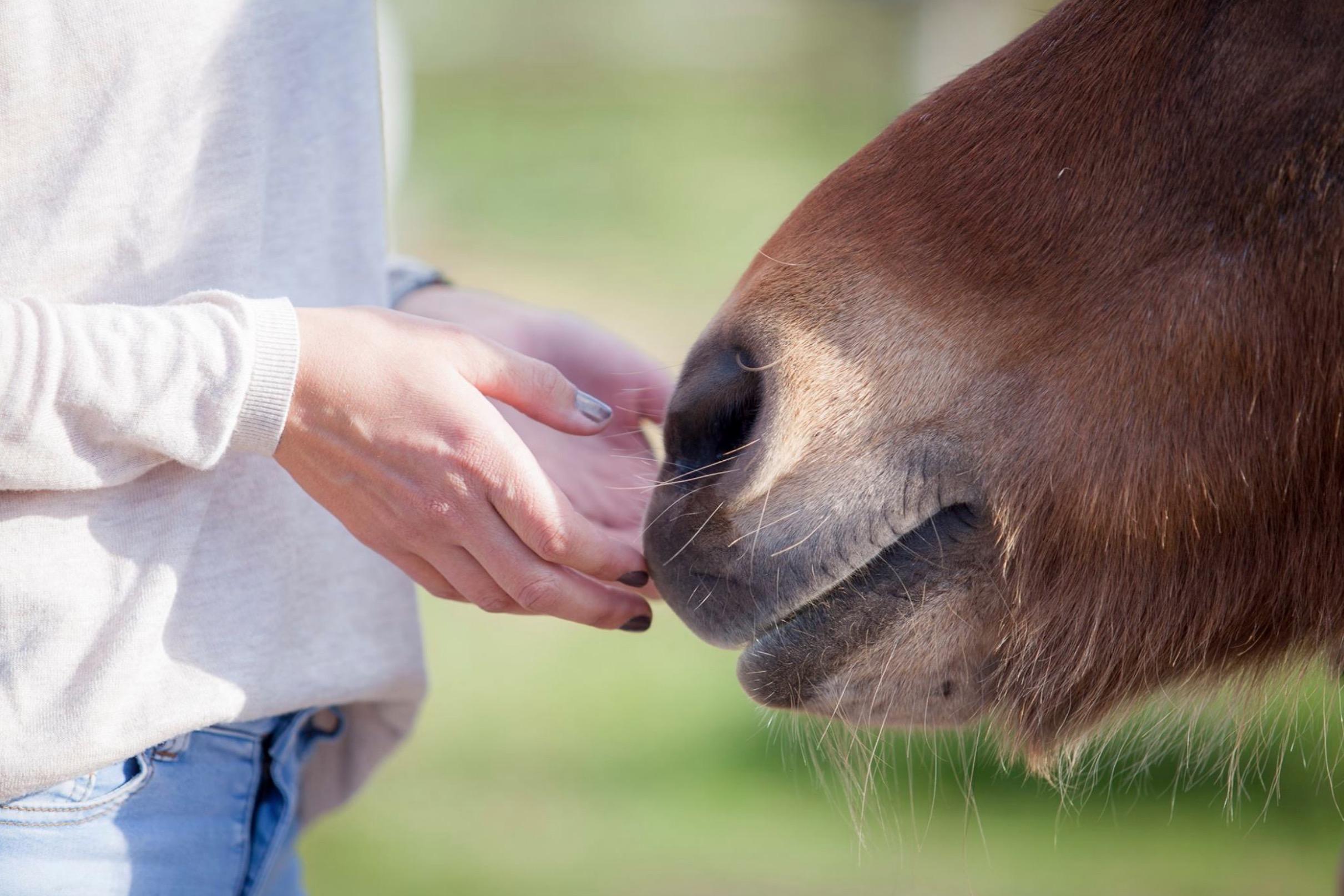 Paardadvies-Tessa-Denn-paarden-coaching-Myra-Wippler-2.jpg