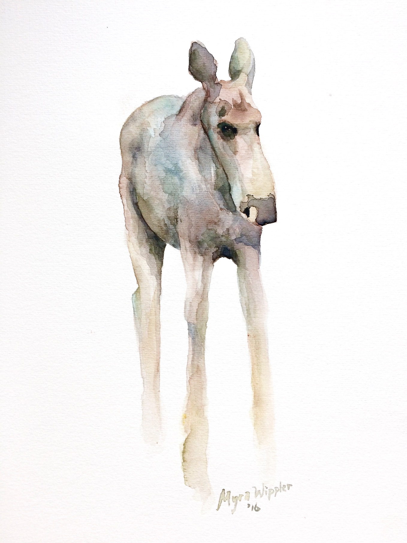 Young female moose in aquarel
