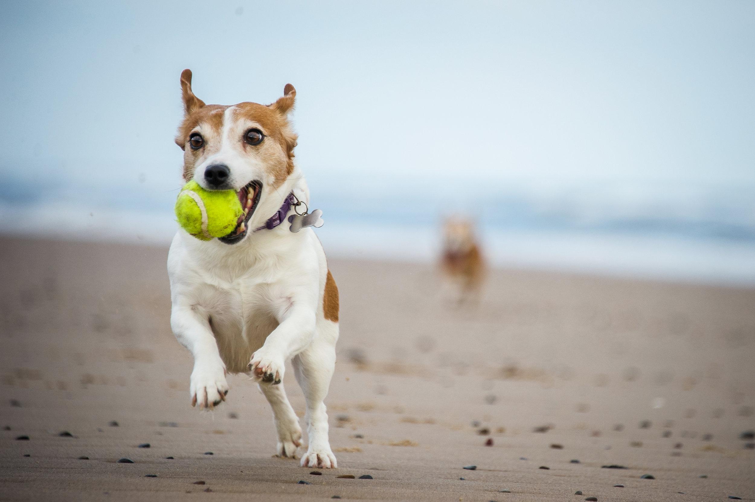 Dog and Ball.jpg