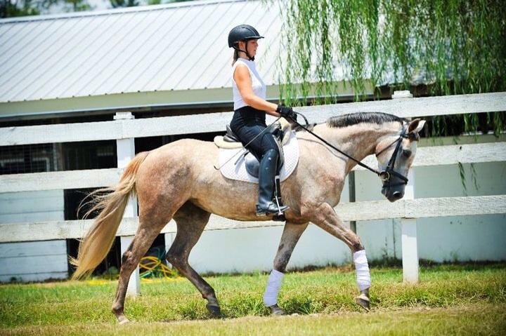 Kite, 30 days under saddle. The first horse I started myself.