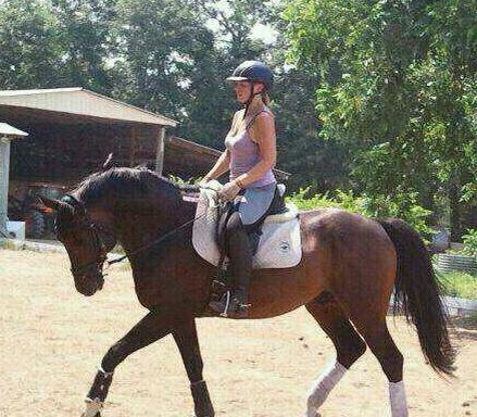 Tanzeln, Trakehner stallion owned by John and Kari Cassel of Cassel Rock Trakehners