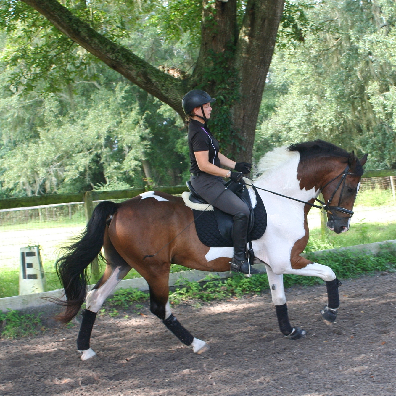 Canter right 3.jpg