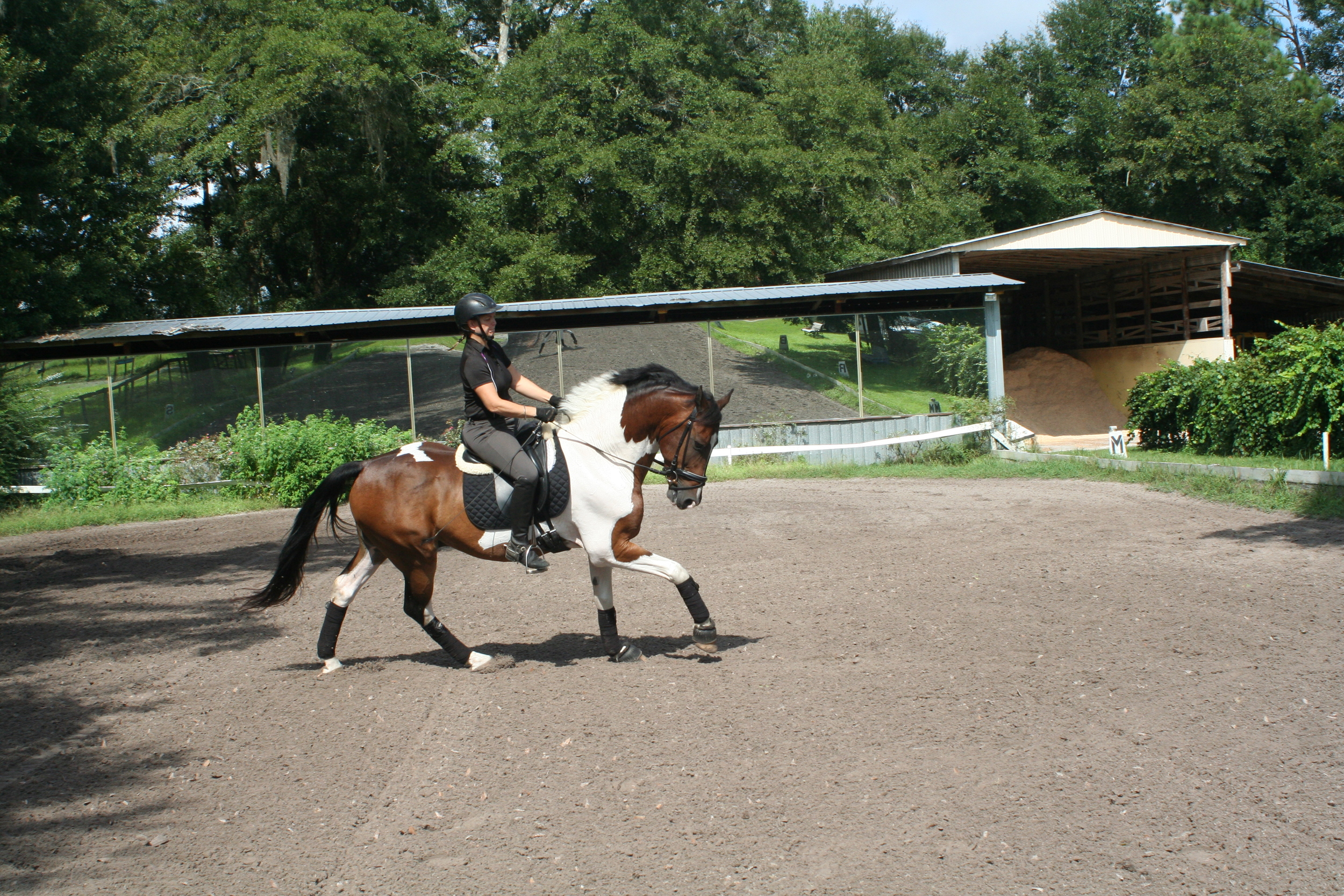 canter right 7.jpg
