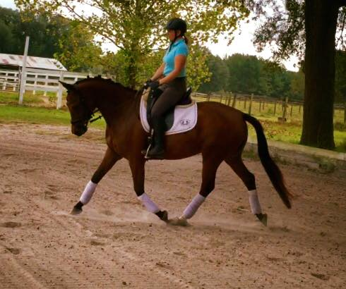 Congrats to Alix in Jay, Florida on her purchase of this Flirti! She is a wonderful mare and you will enjoy her!  UPDATE!! Flirti is a part of the team, and scored 78% at her first recognized dressage show!