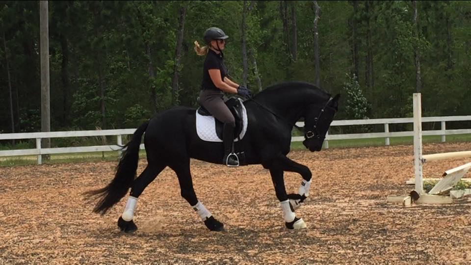 Congrats to Jannes' new owner!  He is an awesome horse!