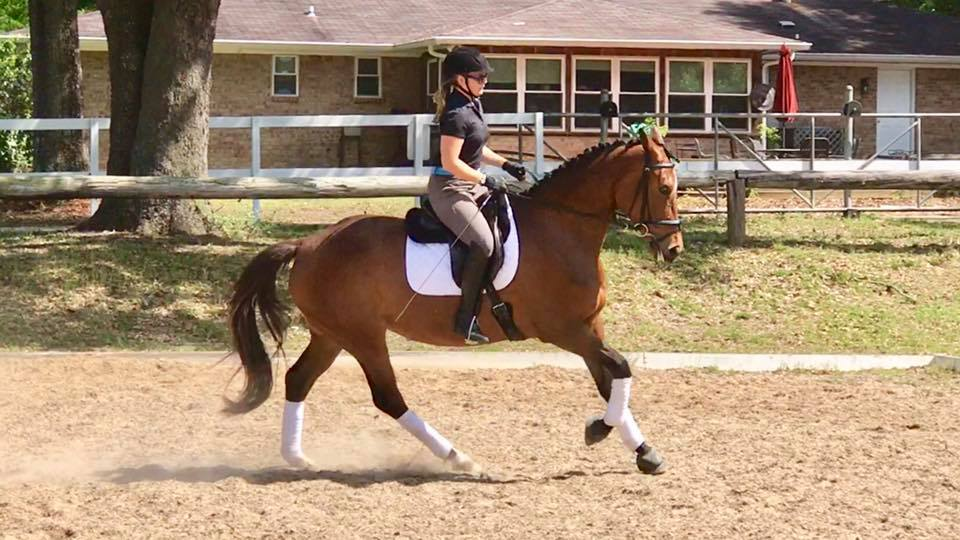 Taylor canter under saddle.jpg