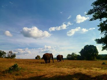 Mondulkiri elephant plains