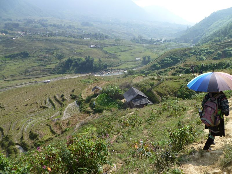 Rice Paddies, Sapa North Vietnam