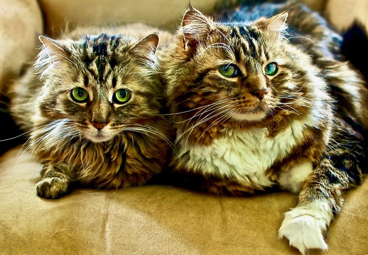 Lucie & Chuck