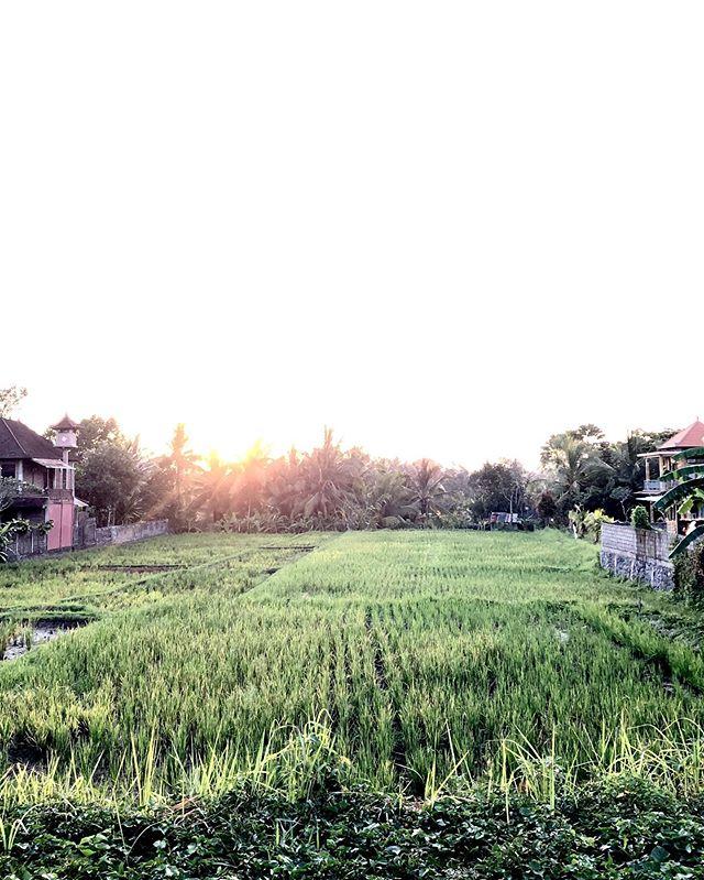 Farewell Ubud 🌿