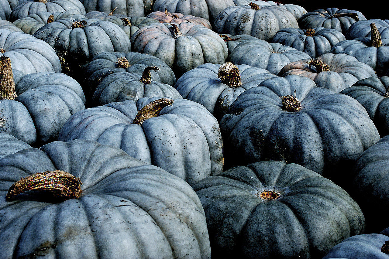 Blue Pumpkins! Who knew? Image from www.beetreestudio.com