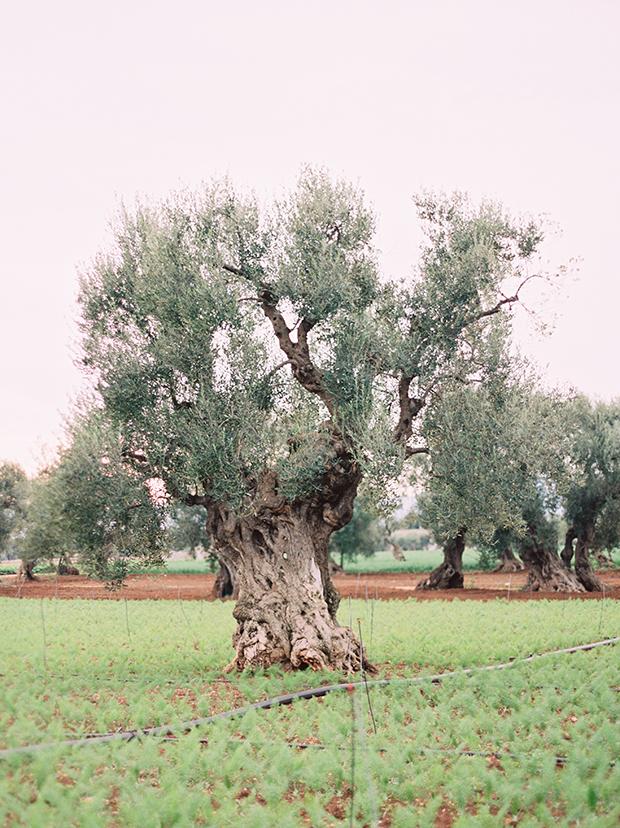 074_10_14_16_italia_blog (1).jpg