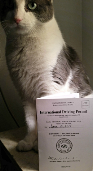My cat, Billy jumped into the shot. I couldn't resist posting this version even though it's not a perfect permit pic. (Ooh, unintentional alliteration!)